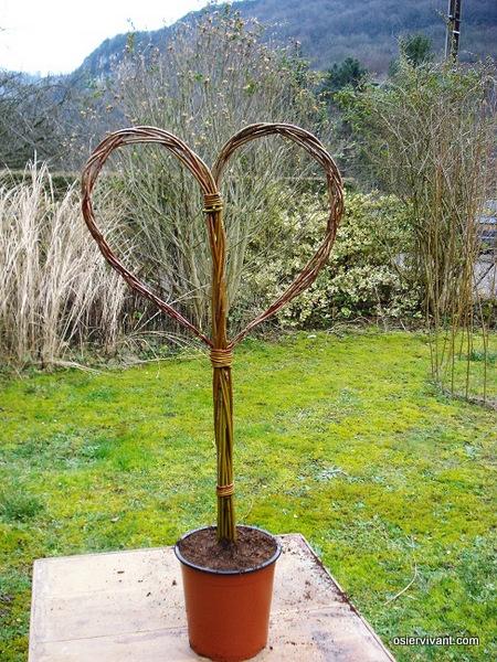 Coeur en osier vivant vendu en kit osier vivant - Coeur en osier ...