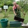 15 07 rempotage jardiniere temporaire haie croisée