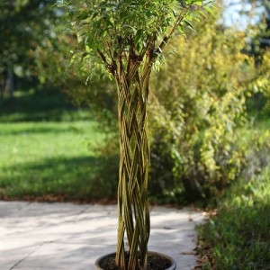 "Arbre ""Twisty tree"" en pot"