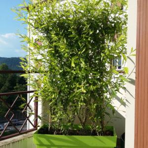 Mini haie 'Green Wall' vendue en kit